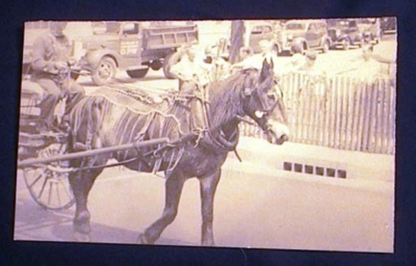 C. 1930s Photograph of Decorative Mule Leading Parade. Photography.
