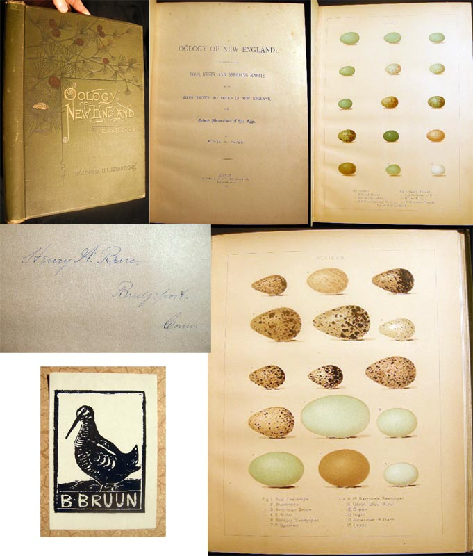 Oology of New England: A Description of the Eggs, Nests, and Breeding Habits of the Birds Known to Breed in New England, with Colored Illustrations of Their Eggs. Elwin A. Capen.