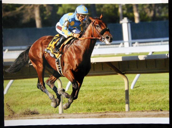 2015 Color Photograph American Pharoah (with Victor Espinoza Up) Wins the Haskell Invitational Aug. 2015 Photo By Staton Rabin. 20th Century - Photography - Staton Rabin - Horse Racing.