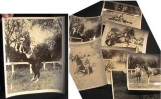 "Group of Large Format Photographs of Andre and ""Smoky Devil"" the Personality Horse. Jenkintown..."