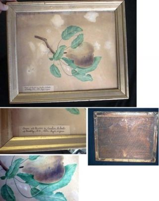 Original Art, of a Pear and Leafy Branch, drawn and Painted By Emeline A. Frost at Brooklyn, N.Y....