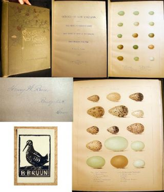 Oology of New England: A Description of the Eggs, Nests, and Breeding Habits of the Birds Known...