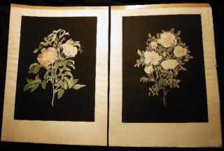 1797 Pair of Hand Colored Stipple Engravings of Roses by Mary Lawrance. Art - 18th Century -...