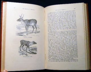 The Antelope and Deer of America. A Comprehensive Treatise Upon The Natural History, including the Characteristics, Habits, Affinities, and Capacity for Domestication, of the Antliocapra and Cervidae of North America