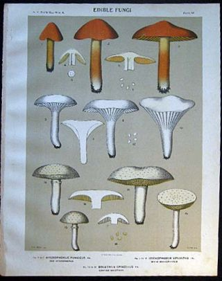 Original Color Lithograph Plate 52 Hygrophorus Puniceus & Hygrophorus Virgineus & Boletinus...