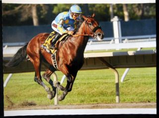 2015 Color Photograph American Pharoah (with Victor Espinoza Up) Wins the Haskell Invitational...
